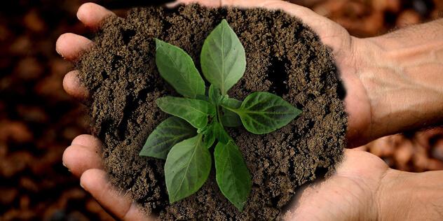 Pflanze in Erde auf der Hand