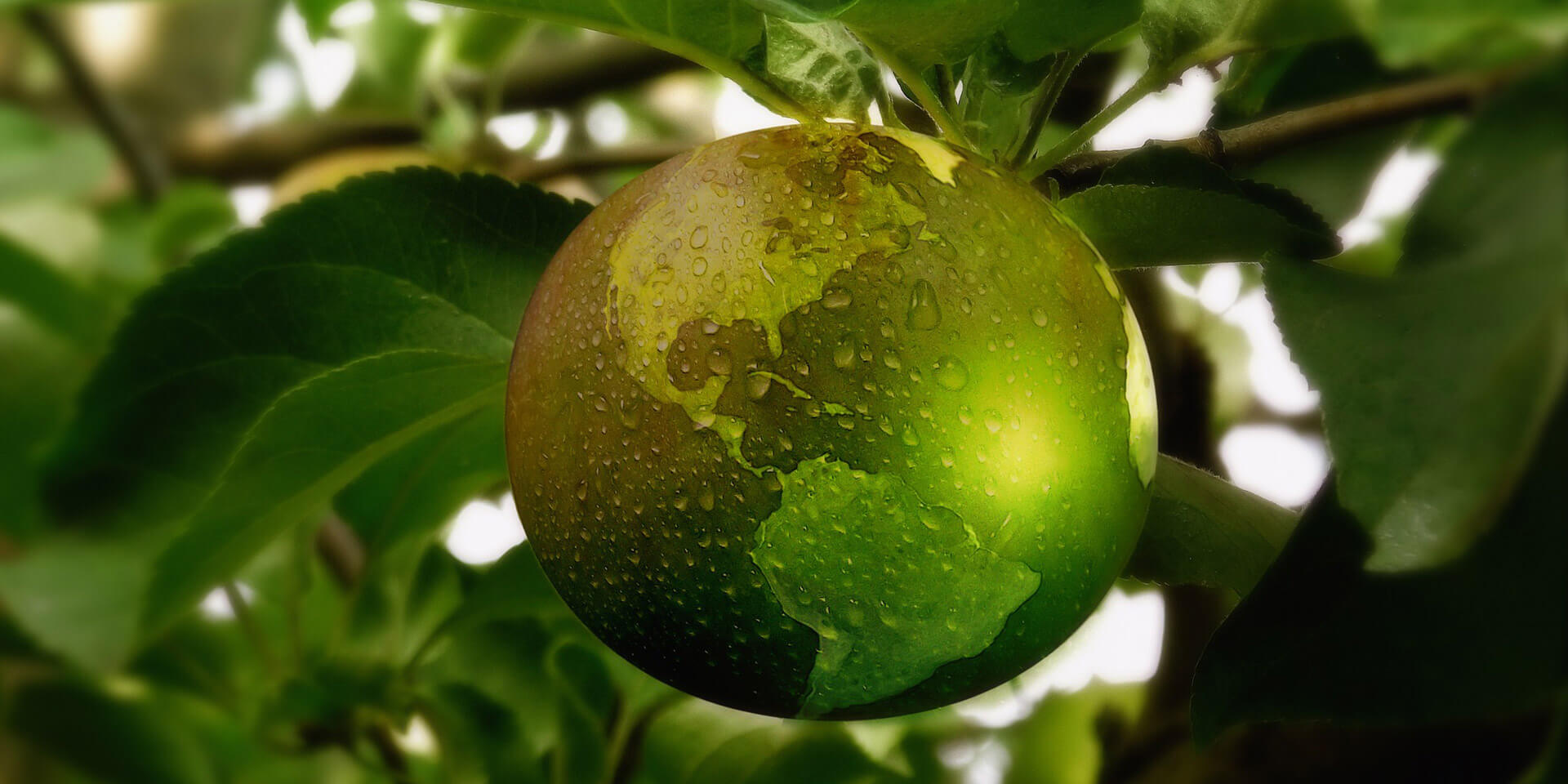 Apfel im Baum als Weltkugel